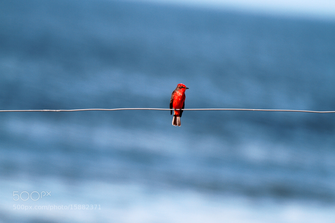 Photograph Lonely!! by Itamar Campos on 500px