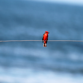 Lonely!! by Itamar Campos (ItamarCampos)) on 500px.com