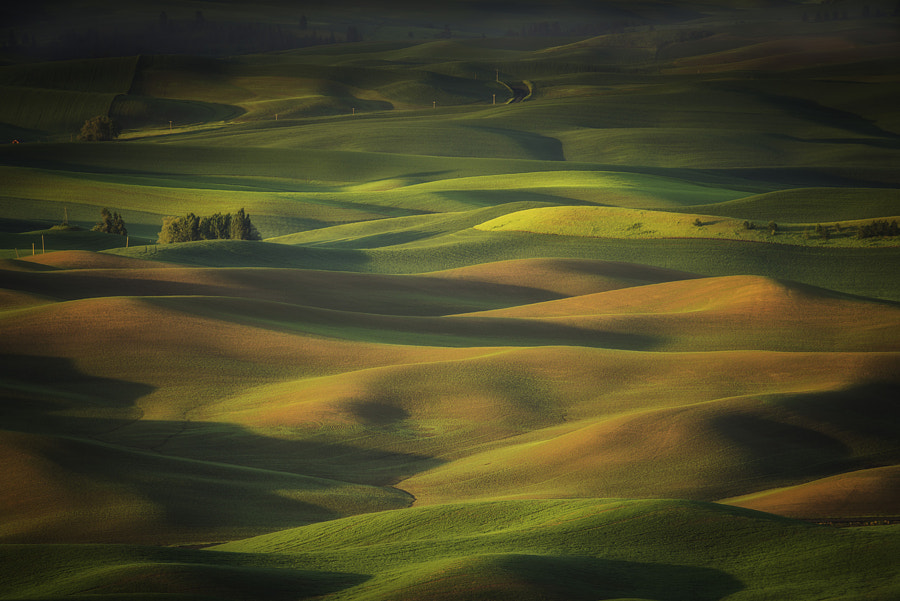 Dreaming Palouse by Lara Koo on 500px.com