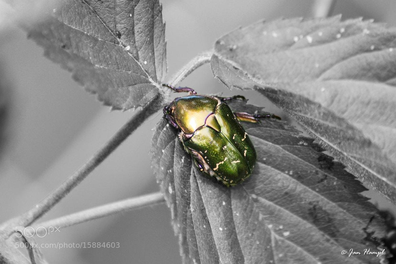 Photograph Bug by Jan Hampl on 500px