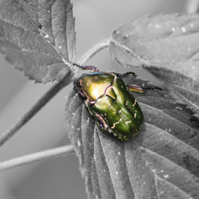Bug by Jan Hampl (janhampl)) on 500px.com