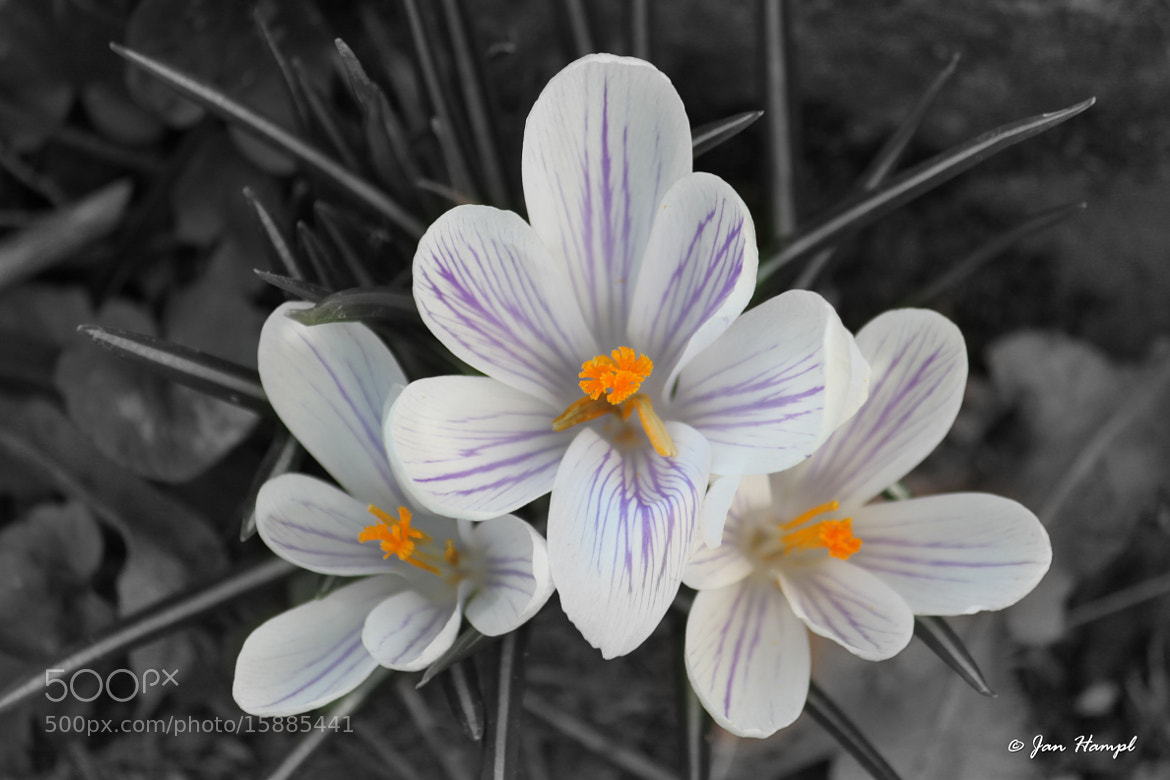 Photograph Flower by Jan Hampl on 500px