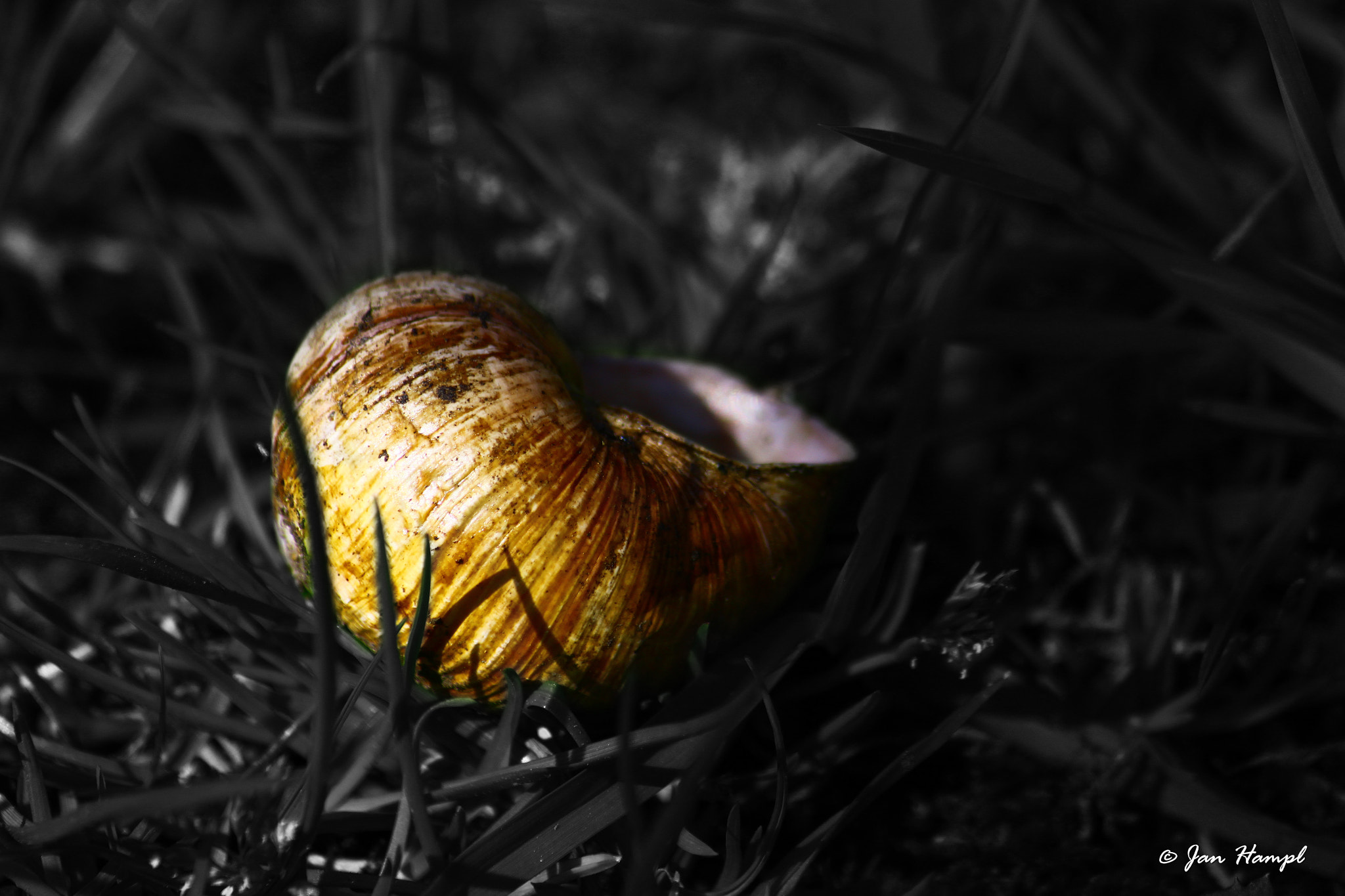 Photograph Conch by Jan Hampl on 500px