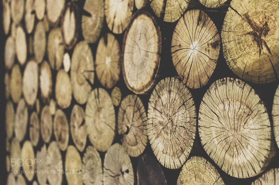 Photograph Woods by Bady qb on 500px