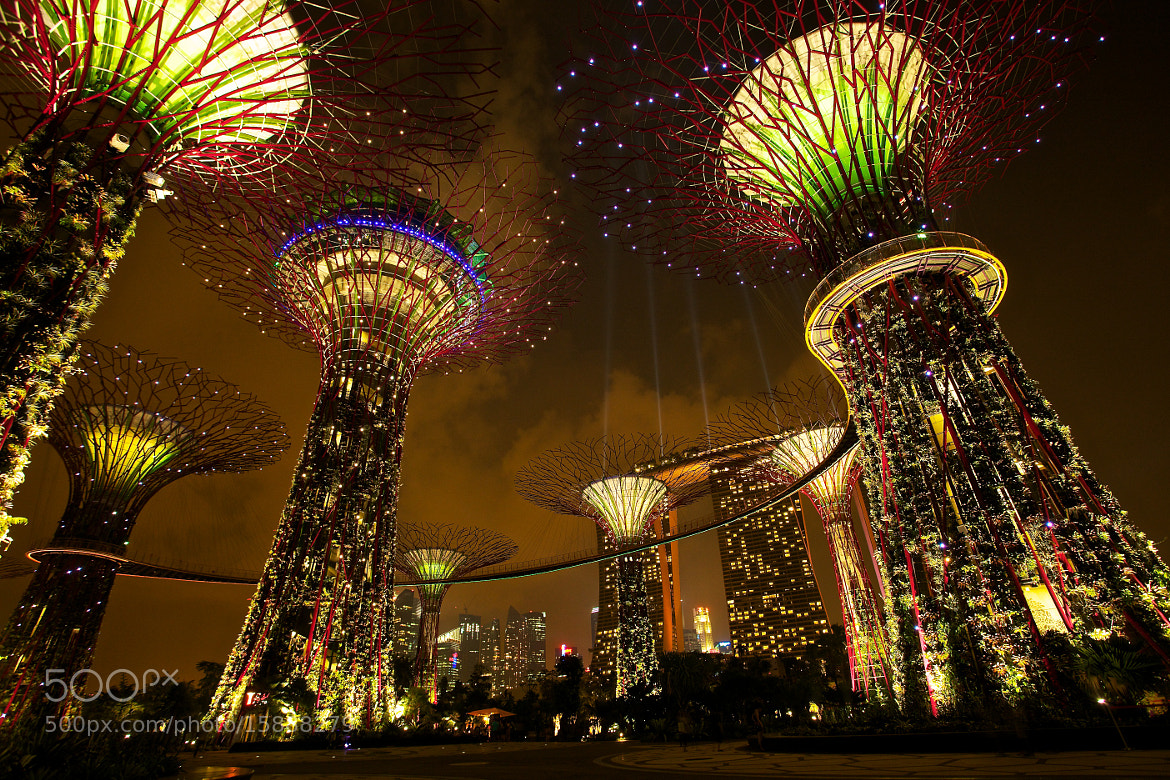 Photograph Super Trees - Garden By The Bay - Singapore by Sean Cheng on 500px