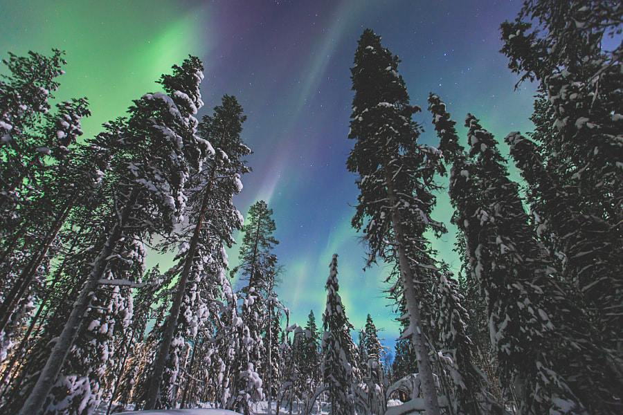 Aurora Borealis, Northern Lights over Lapland