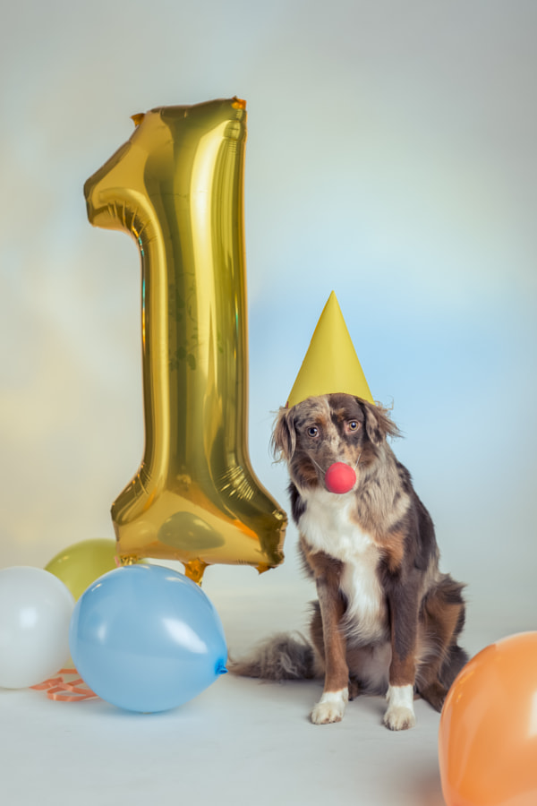 Happy birthday! by Julia Wimmerlin on 500px.com