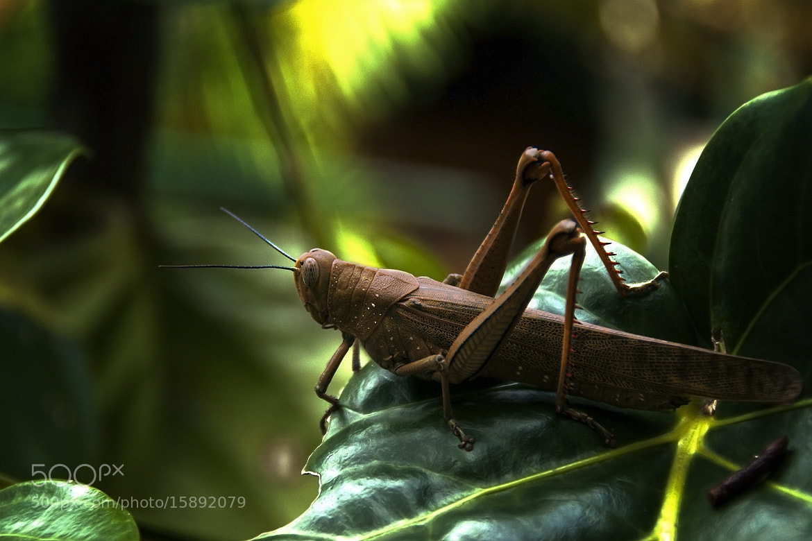 Photograph Locust by Lars C. on 500px