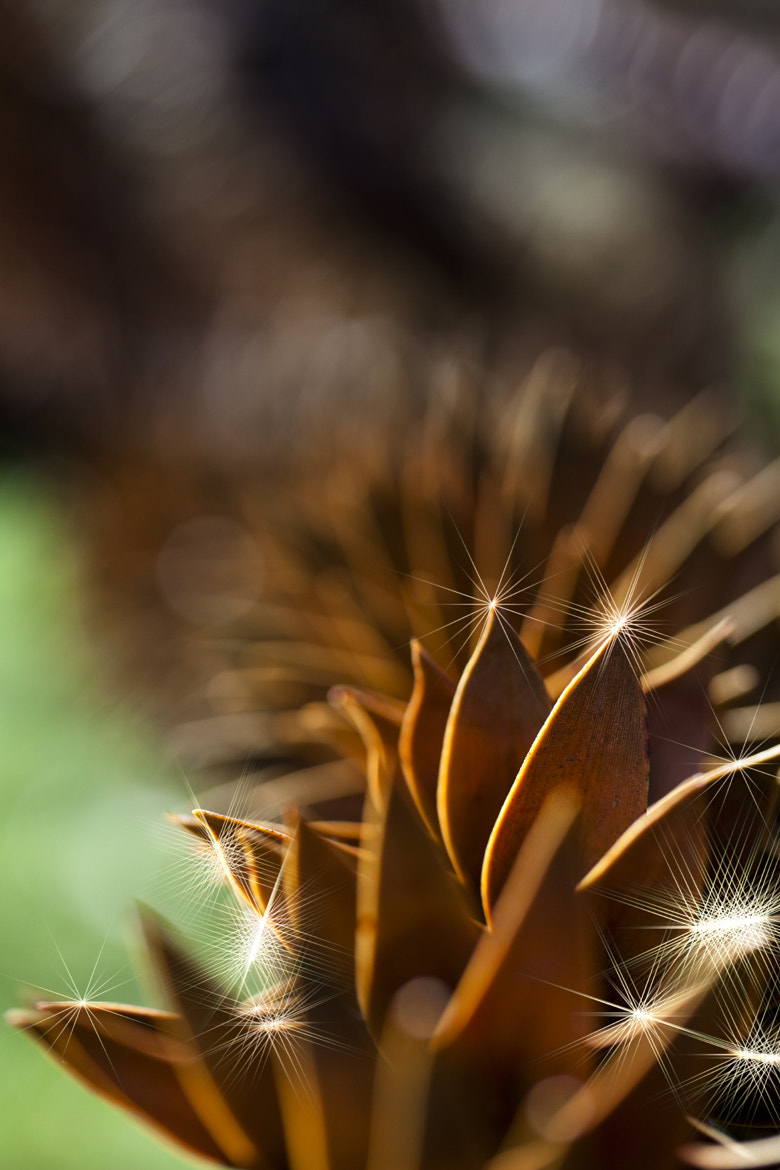 Photograph Light Cactus by Xavier Wiechers on 500px