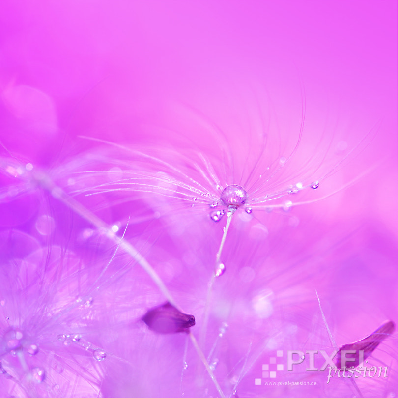 Photograph soft by Pixel Passion on 500px