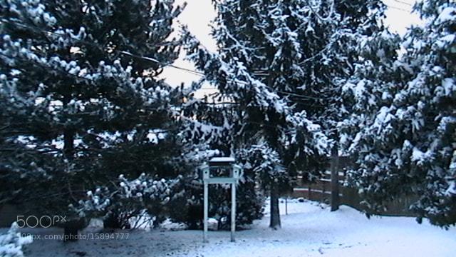 Photograph winter wonderland by Terry Sturtevant on 500px