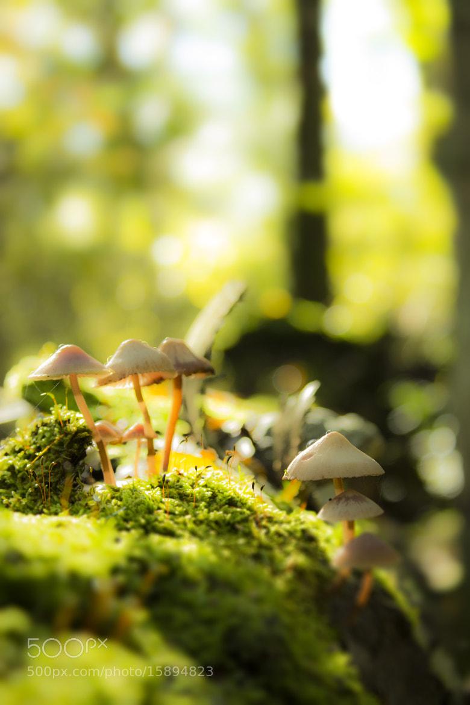 Photograph Mushroom by Rasmus Lundin on 500px