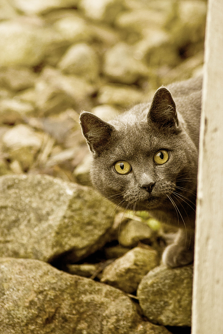 Photograph mystery cat by Rasmus Lundin on 500px