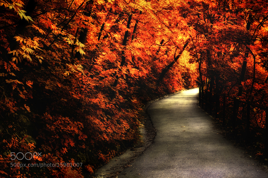 Photograph In red by Laszlo Gal on 500px