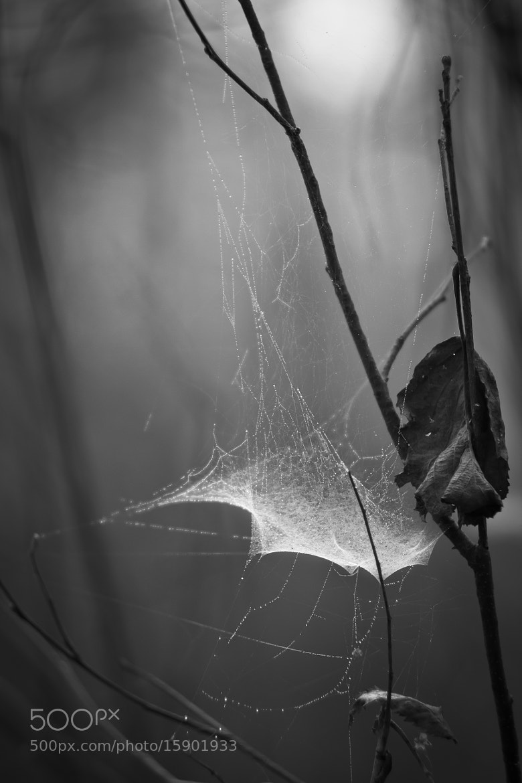Photograph Autumn spiderweb by Alexey Kim on 500px