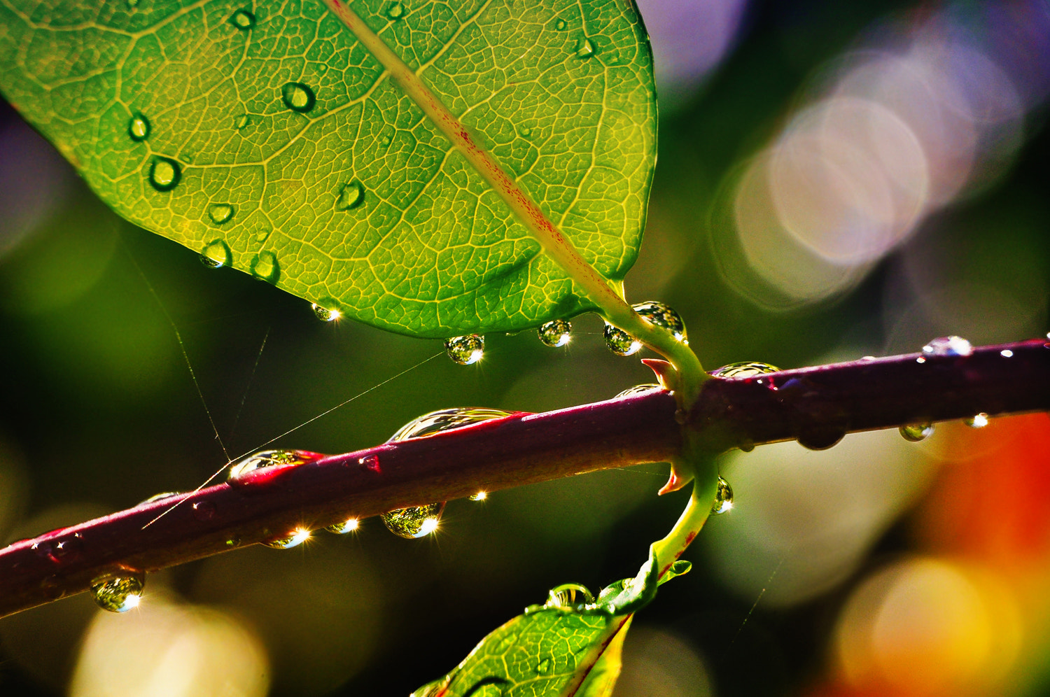 Photograph rain in October by Jozsef Balogh on 500px