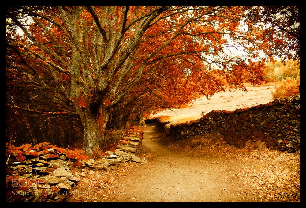 Photograph Camino Hacia el Bosque by Juan Real on 500px
