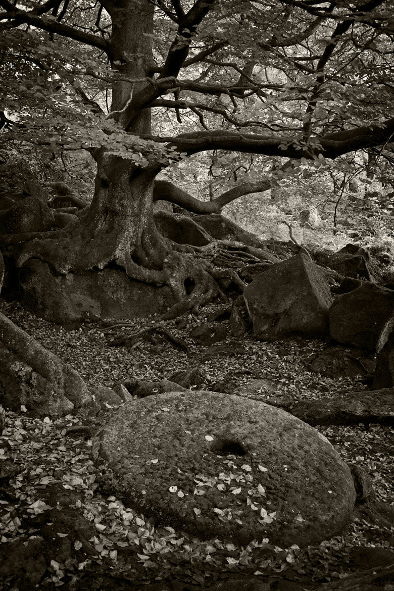 Photograph Padley Gorge by Chris Davis on 500px