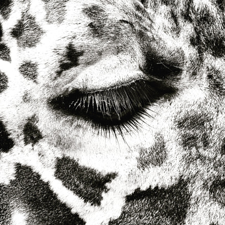 Giraffe eye black and, Fujifilm FinePix F750EXR