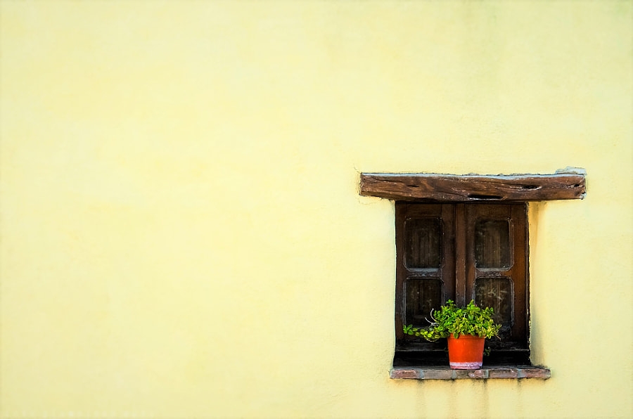 A vase of flowers at a rustic wooden window by Giampiero Acri on 500px.com