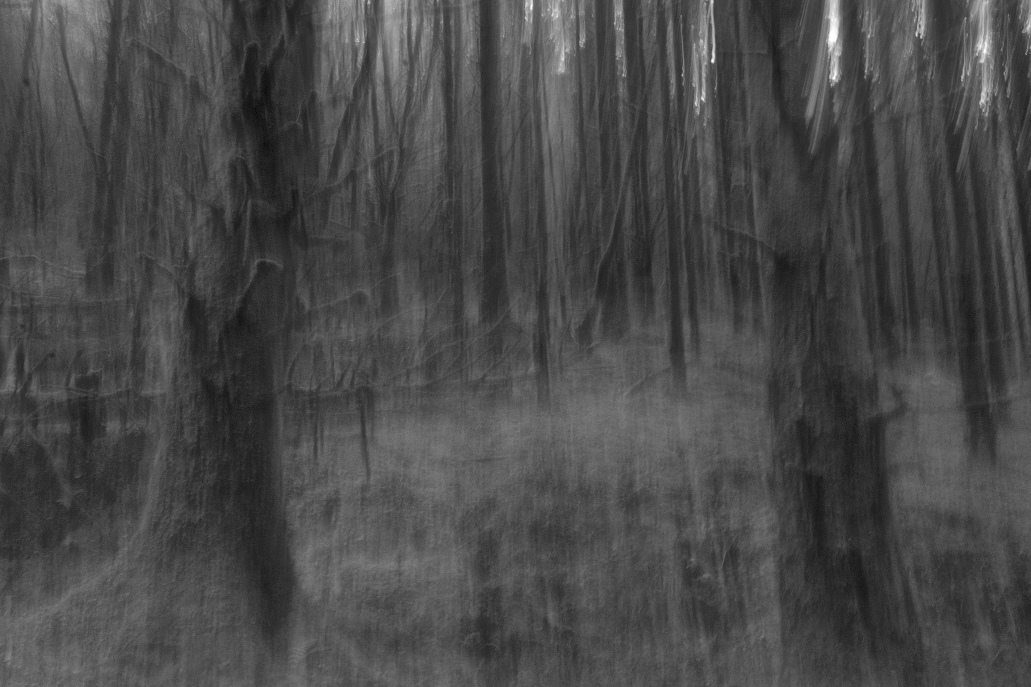 Photograph Into the woods by Craig MacLeod on 500px