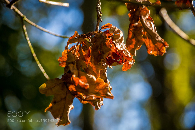Photograph Season hiatus by Christopher A. Dominic on 500px