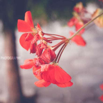 FLLOWERS