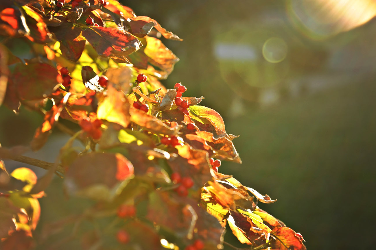 Photograph Autumn glory by Kelley Nelson on 500px