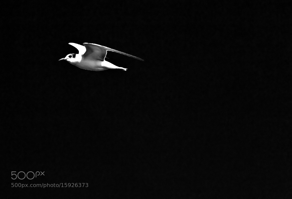 Photograph a sole Flyer by Akash Deep on 500px