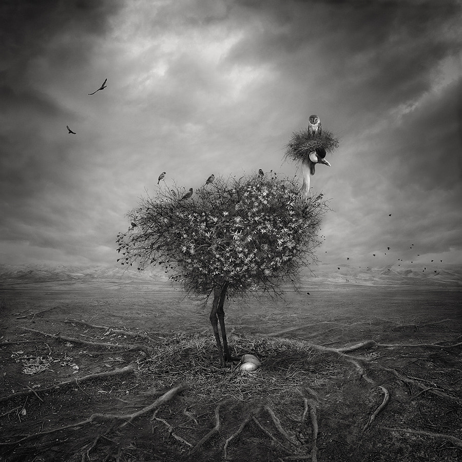 Untitled by Sherry Akrami on 500px.com