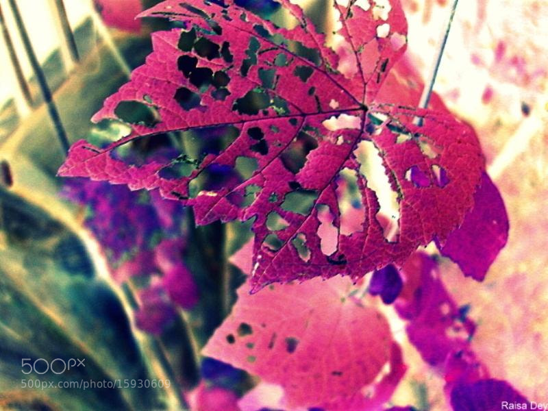Photograph Autumn is a second spring when every leaf is a flower. by Raisa Dey on 500px