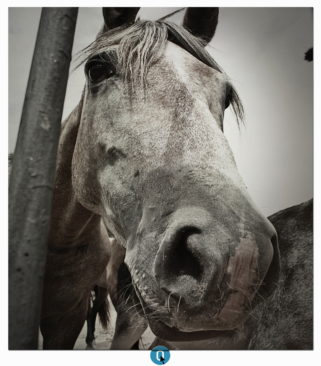 Photograph Gray horse by CERO . on 500px