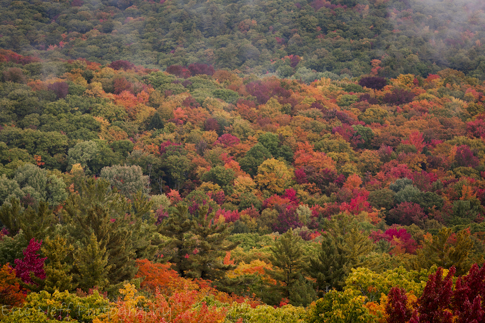 Photograph Fall Colours by Eric Neff on 500px