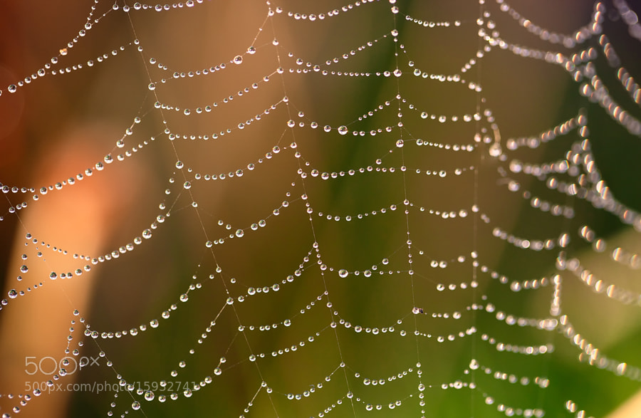 Photograph The Web II by Asi Yacobovitch on 500px