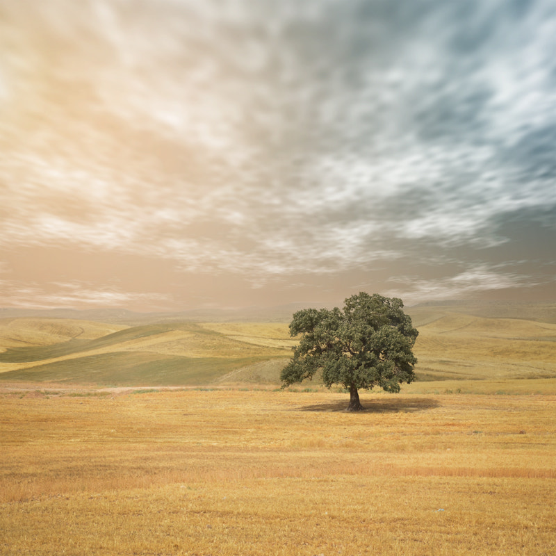 Photograph Still Land by Hossein Zare on 500px