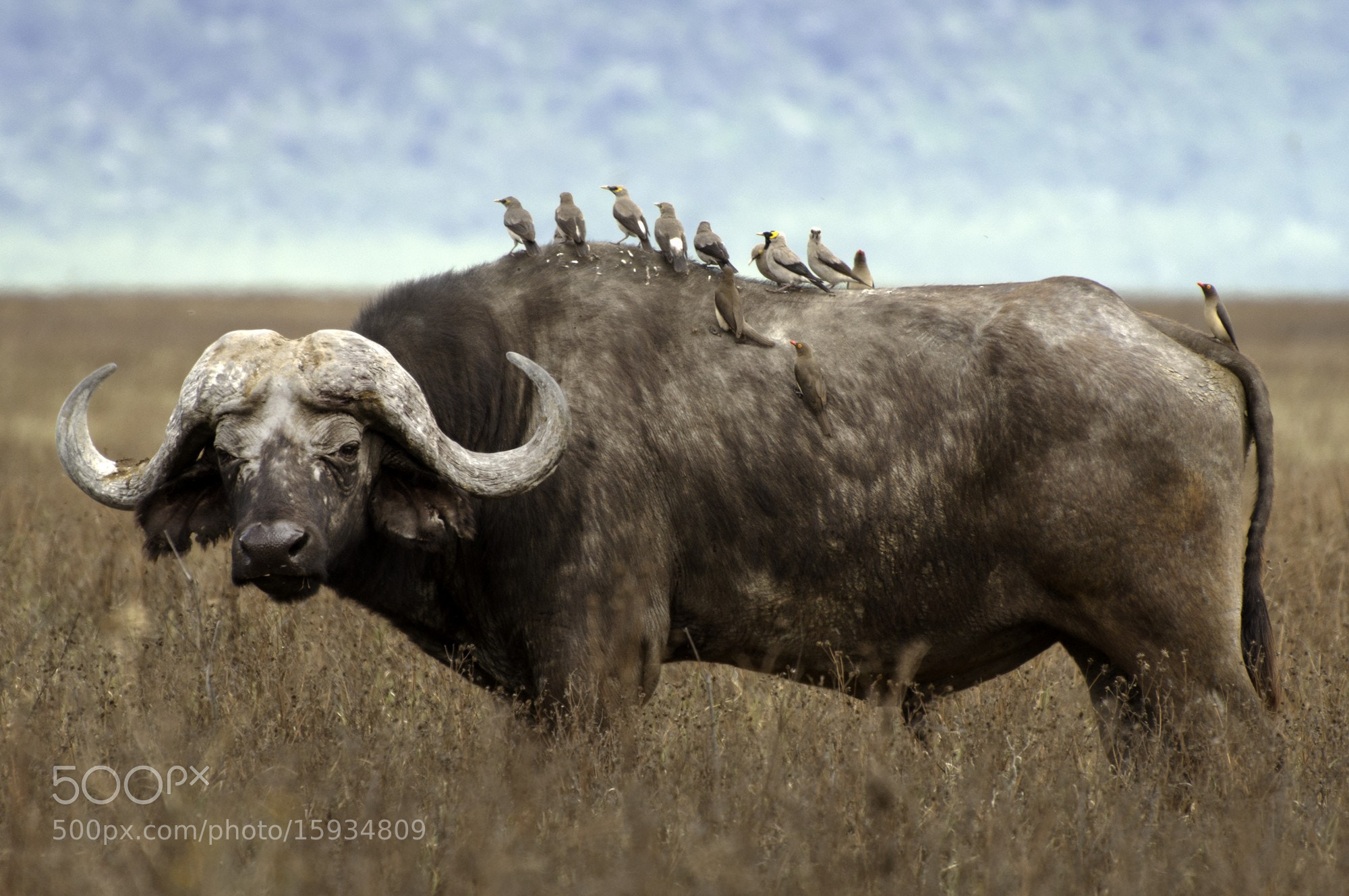 Photograph Buffalo soldier by Yoel Schlaen on 500px