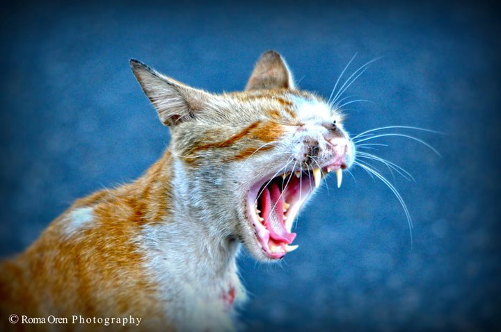 Photograph Yawning by Roma Ts on 500px