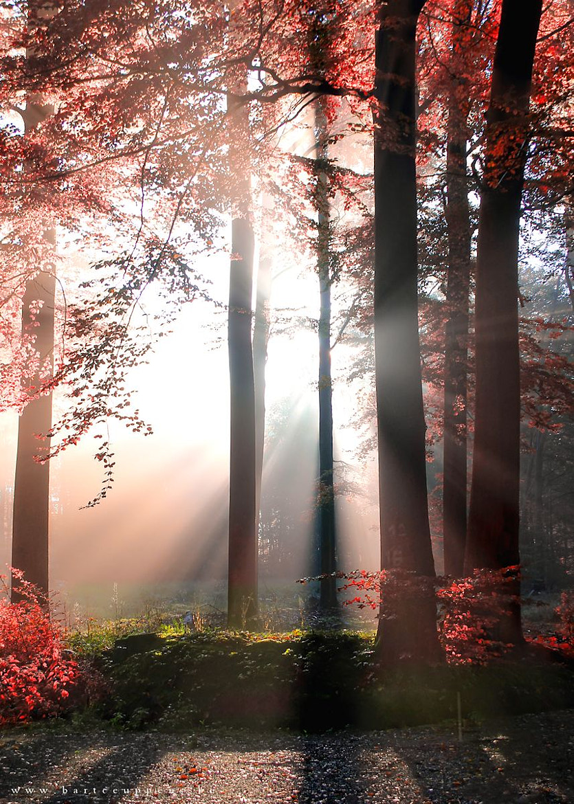 Photograph autumn is just around the corner 8 by Bart Ceuppens on 500px