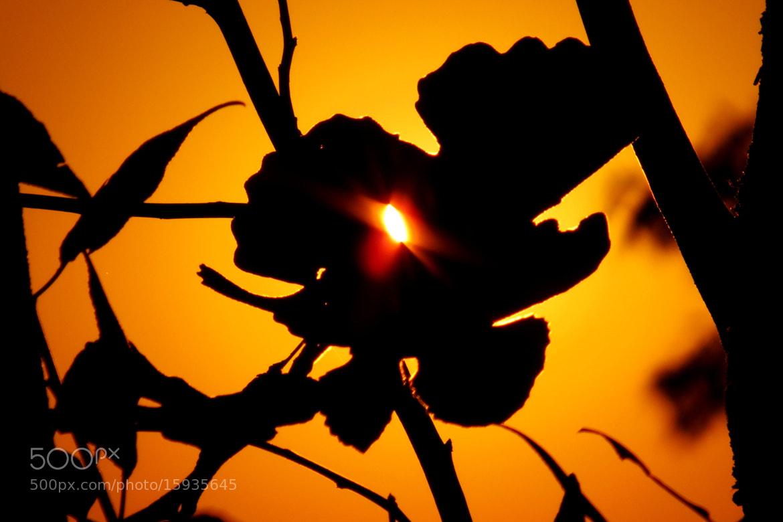 Photograph sun.... by sumeyra durmuslar on 500px