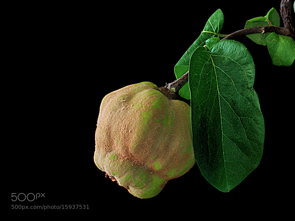 Photograph Quince by Vendenis . on 500px
