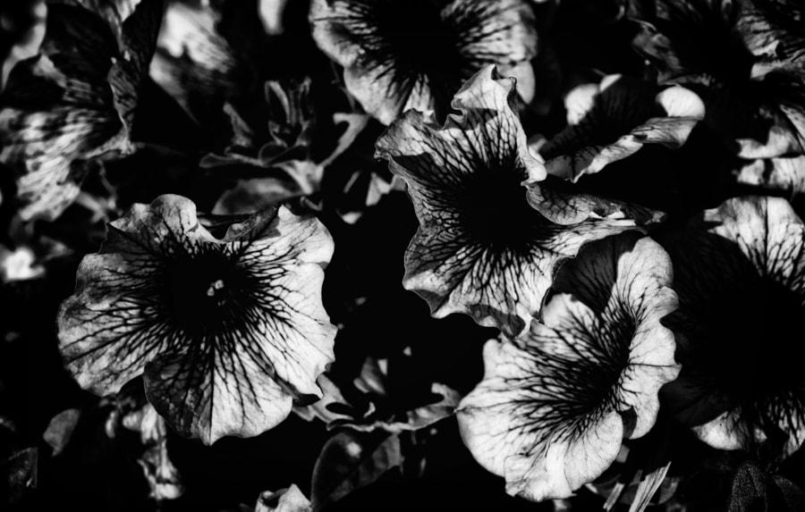 Flowers in B&W