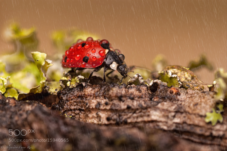 Photograph Autumn by Alejandro  Ferrer Ruiz  on 500px