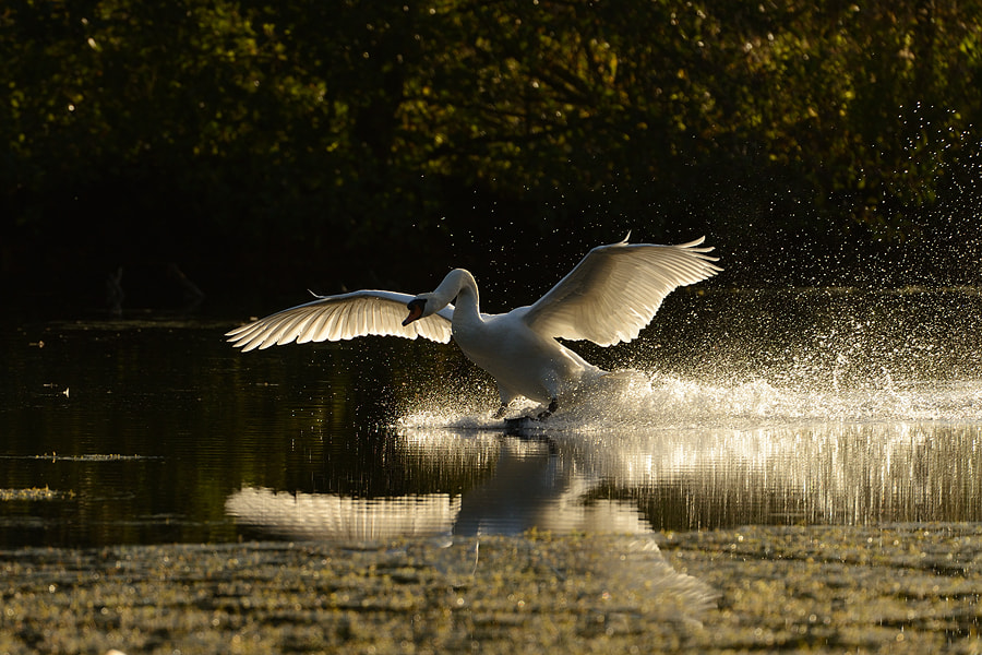 Photograph Landing with backlight by Erik Veldkamp on 500px