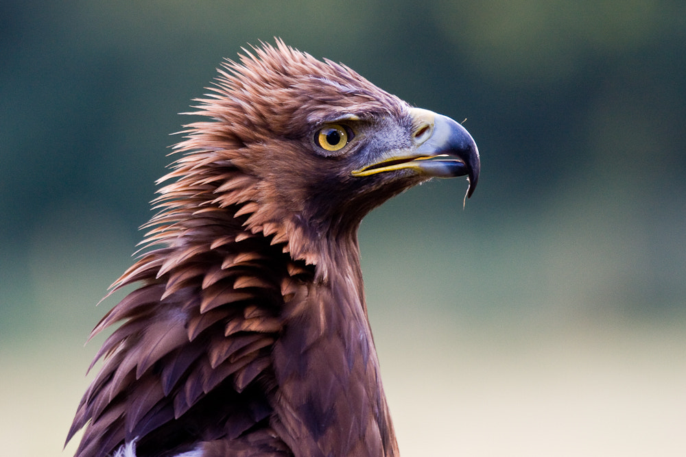 Photograph Bad hair day by Brian Scott on 500px