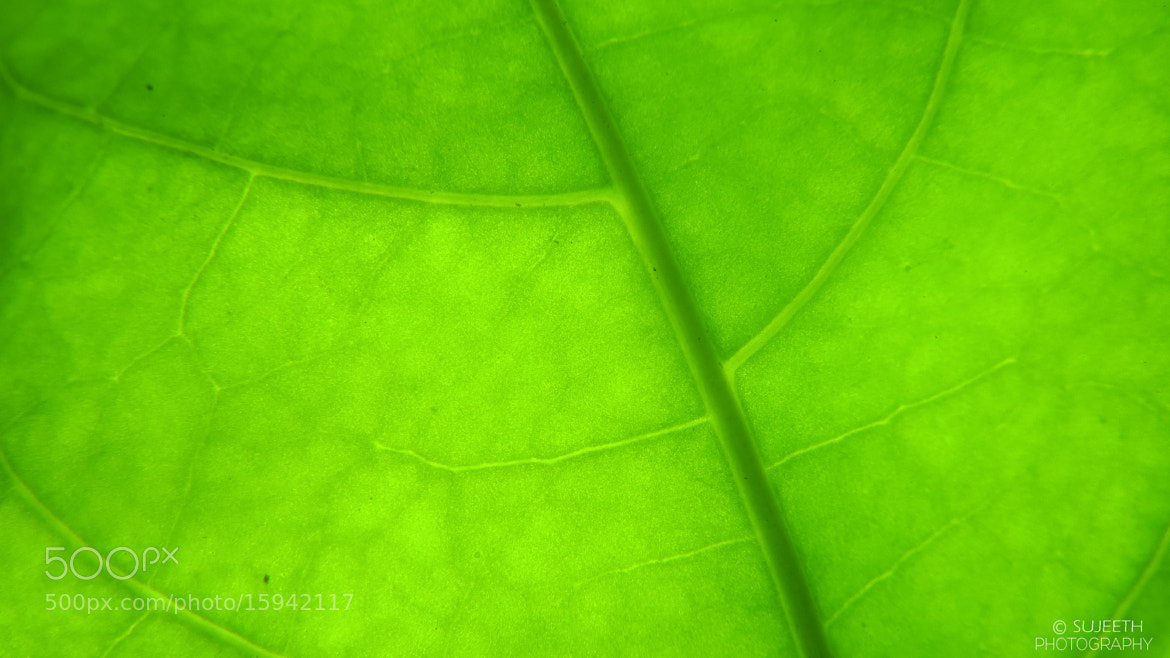Photograph macro leaves  by sujeeth kumar on 500px