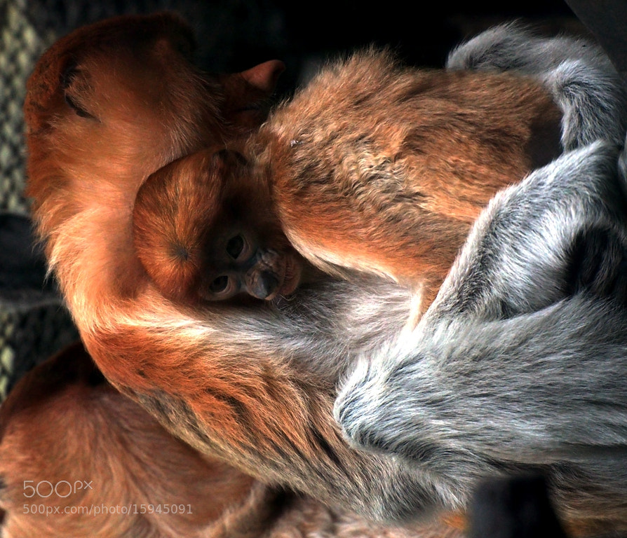Photograph I Love U Mom! by Debora Sylvia Roseny on 500px