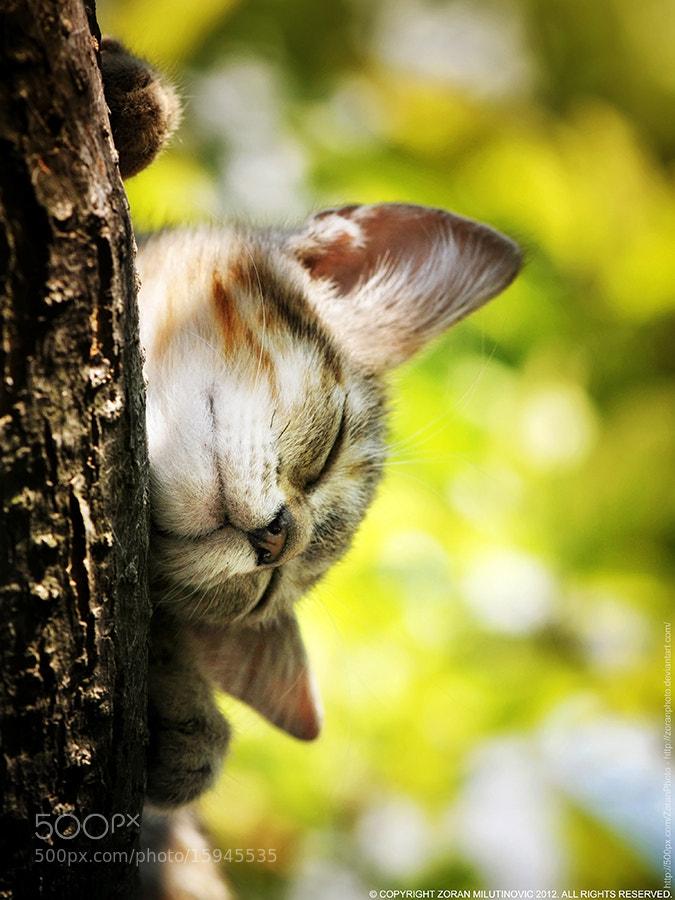 Photograph Feeling sleepy by Zoran Milutinovic on 500px