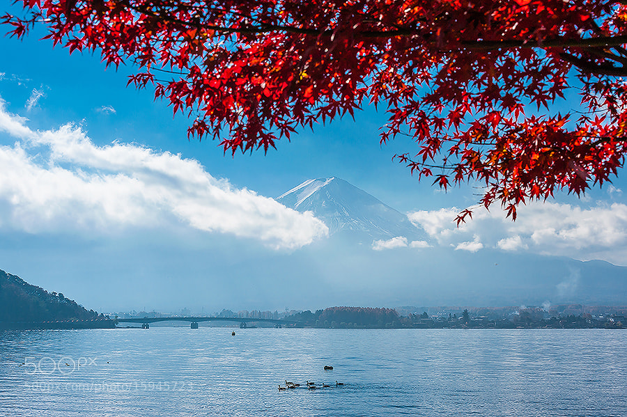 Photograph Autumn in Japan by skyearth skyice on 500px
