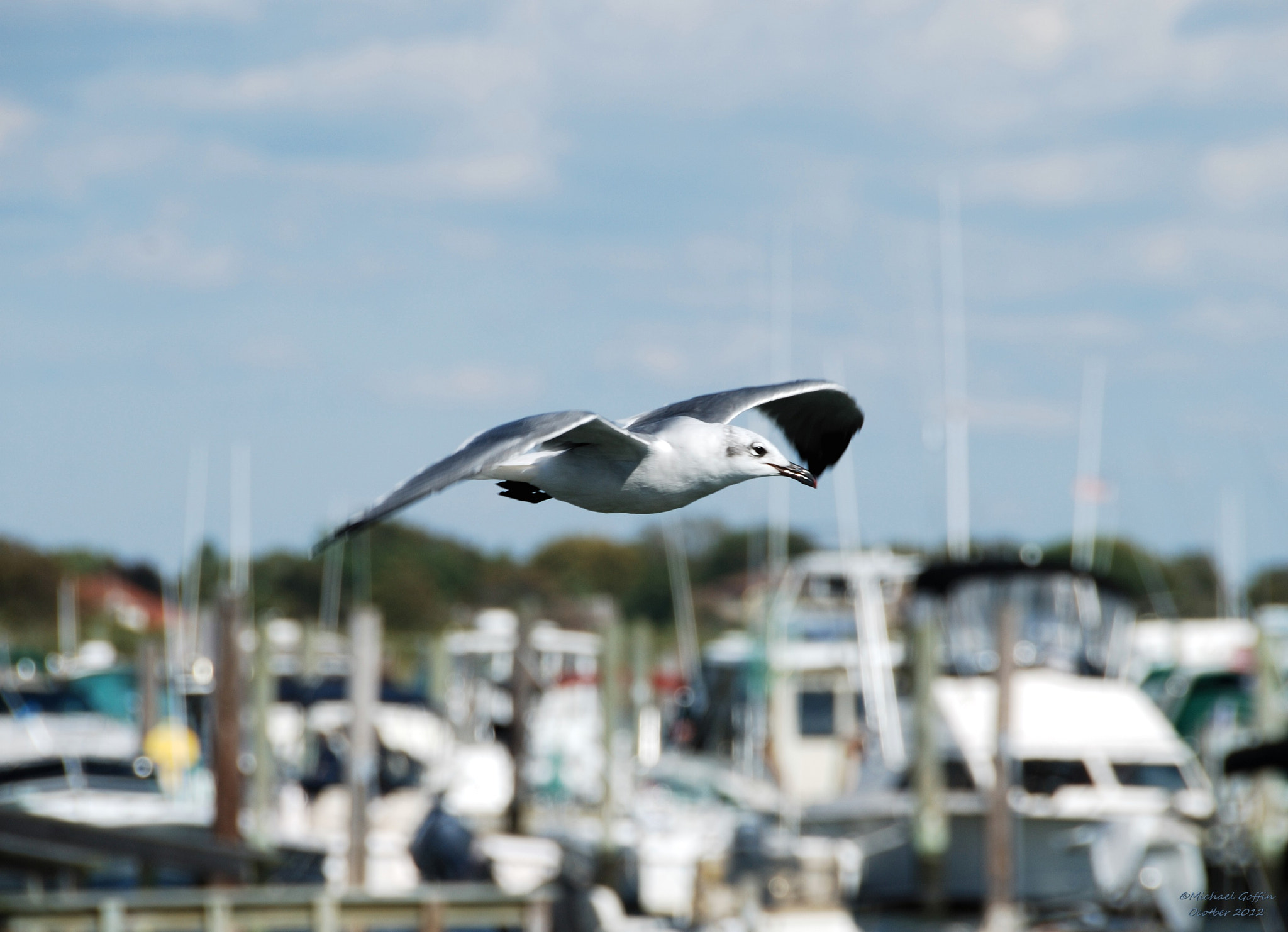 Photograph Sea Gull by MICHAEL GOFFIN on 500px