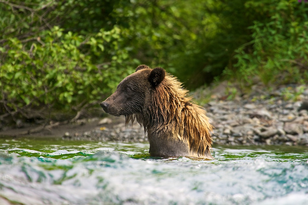 Photograph The Mullet Hair Bear by Buck Shreck on 500px